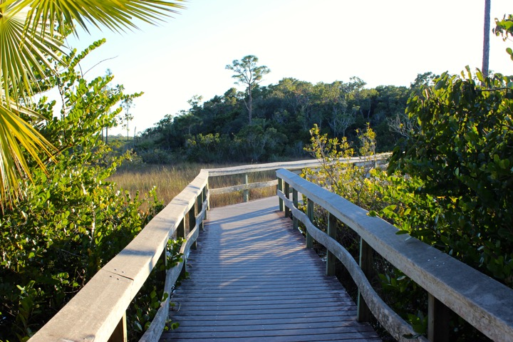 Everglades Boardwalk