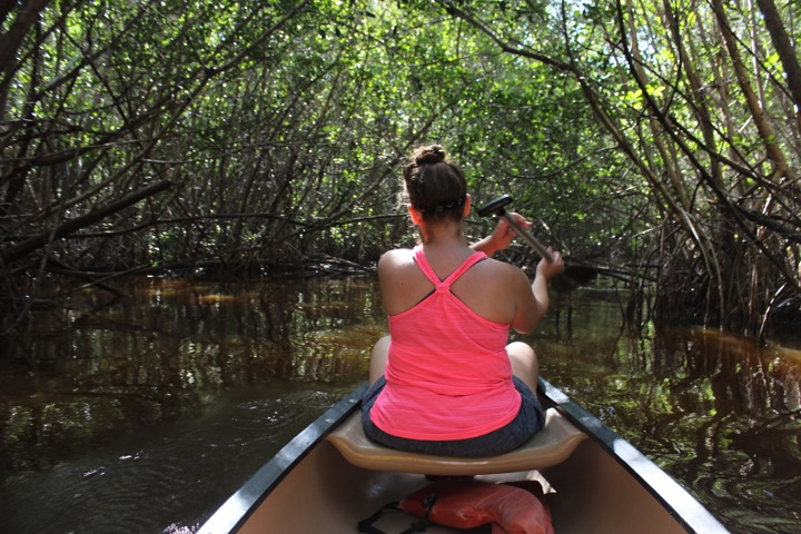 Navigating the Mangrove Tunnel